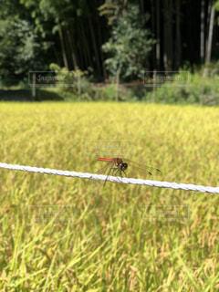 草の上にの写真・画像素材[1480363]