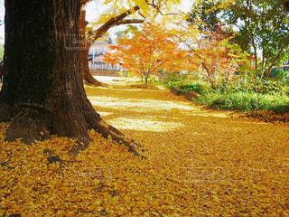 フィールドの真ん中の木の写真・画像素材[1449592]