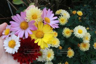 近くに黄色い花のアップの写真・画像素材[1609289]