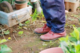 庭の人の写真・画像素材[1609295]