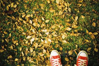 autumn colour of leavesの写真・画像素材[1613624]