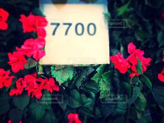 近くの花のアップの写真・画像素材[1450695]