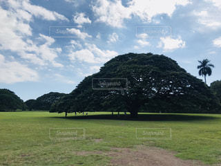 このー木なんの木気になる木の写真・画像素材[1521162]