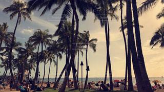 ハワイの夕焼けの写真・画像素材[1521189]