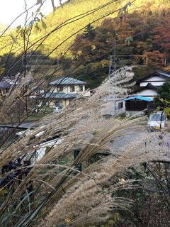 秋の風景の写真・画像素材[1532083]