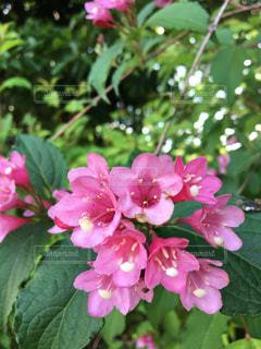 山の花の写真・画像素材[1532097]