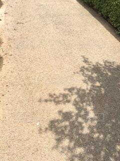 木の影の写真・画像素材[1532104]