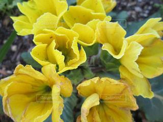 近くに黄色い花のアップの写真・画像素材[1534630]