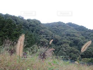 フィールドの茂みのグループの写真・画像素材[1673065]