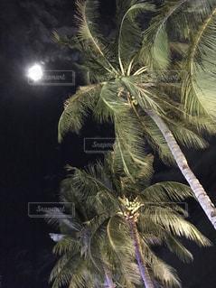 月とヤシの木の写真・画像素材[1451888]