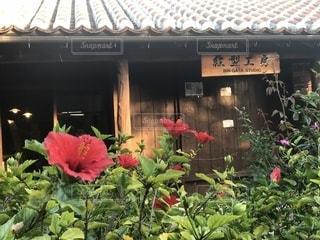 沖縄の風景の写真・画像素材[1485900]