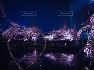 ライトアップされた桜の写真・画像素材[1451966]