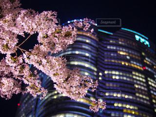 夜桜と森ビルの写真・画像素材[1451968]
