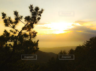 木と夕焼けの写真・画像素材[1457333]