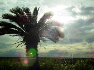 ヤシの木と太陽の写真・画像素材[1457337]