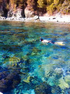 小笠原の透明度が高い海でシュノーケリングの写真・画像素材[1464345]