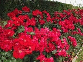 お花畑の写真・画像素材[46970]