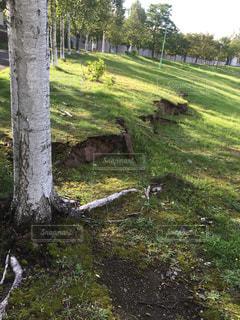 北海道地震による地割れの写真・画像素材[1452234]