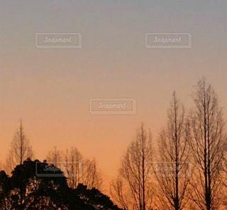 夕日と木立の写真・画像素材[1490537]