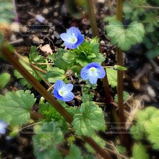 春の山野草の写真・画像素材[1497336]