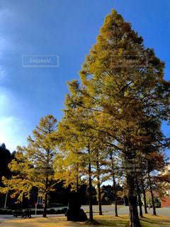 秋の樹木の写真・画像素材[1580627]