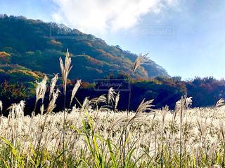 秋の高原の写真・画像素材[1580685]