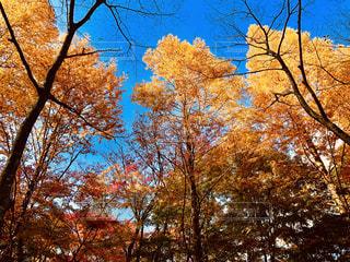 秋の風景の写真・画像素材[1582623]