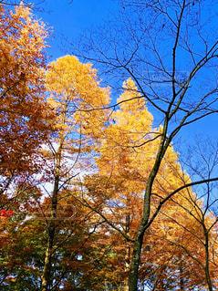 秋色の木々の写真・画像素材[1582626]