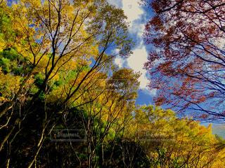 秋の木々の写真・画像素材[1582630]