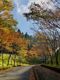 秋の散歩道の写真・画像素材[1582634]