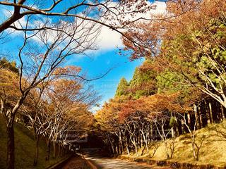 秋の風景の写真・画像素材[1582639]