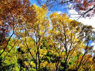 秋の木々の写真・画像素材[1583276]