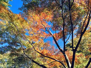 秋色の樹木の写真・画像素材[1615435]