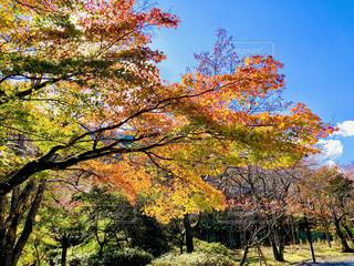秋の樹木の写真・画像素材[1615439]
