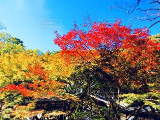 鮮やかな樹木の写真・画像素材[1624330]