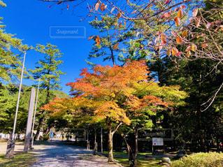 色づく樹木の写真・画像素材[1624337]