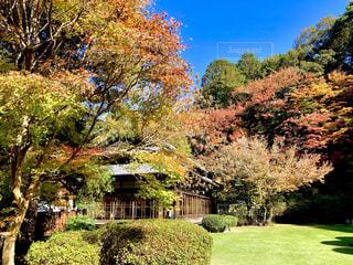 紅葉した庭の写真・画像素材[1638411]