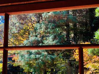 窓の外の木々の写真・画像素材[1638436]