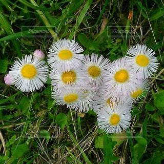 春の写真・画像素材[47445]