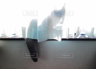 猫の写真・画像素材[77530]