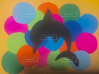 カラフルなイルカの写真・画像素材[1510989]