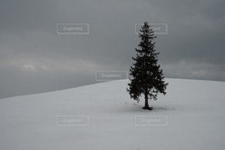 自然の写真・画像素材[51607]