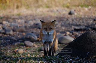 野生動物の写真・画像素材[131357]