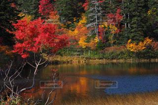 秋の写真・画像素材[232384]