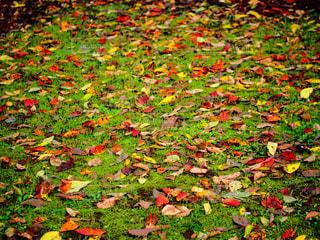 秋の写真・画像素材[238275]
