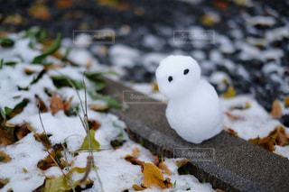 冬の写真・画像素材[241123]