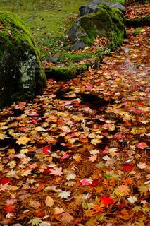 秋の写真・画像素材[253771]