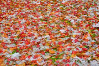 秋の写真・画像素材[253773]