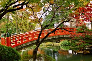 紅葉と赤い橋の写真・画像素材[1453921]