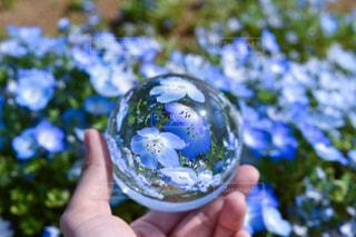 青い花と水晶玉の写真・画像素材[1453777]